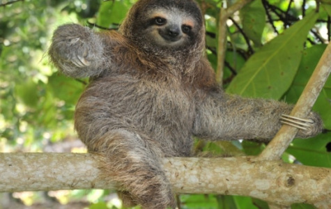 Save the Sloths!