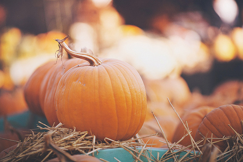 Image result for Fall Pumpkin photography