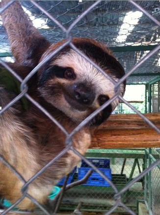 Sloths: Humble Creatures of Pure Zen