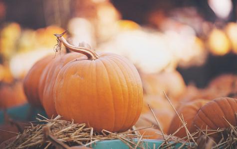 Fall Fun and Pumpkin Spice