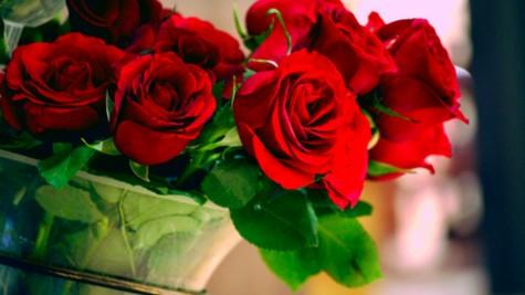 roses-05
