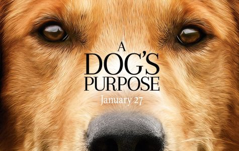What is a Dog's Purpose?