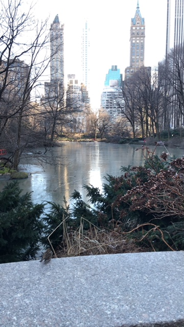 A beautiful view at Central Park!