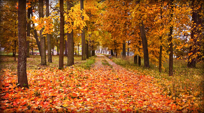 Fall Faves: The Best Sights and Sounds of the Season